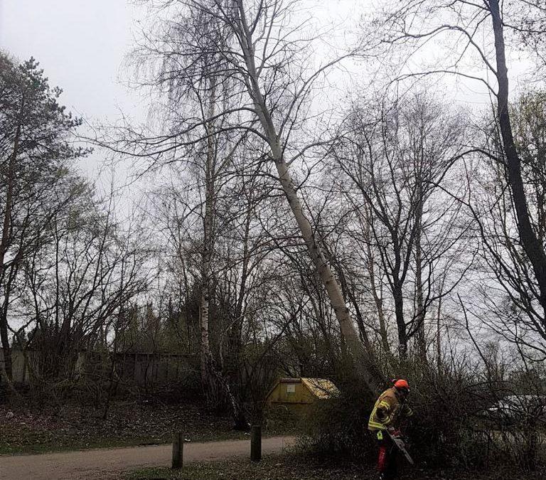 Baum in Schieflage
